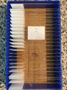 Ki67 control slides, 1 stained, 24 unstained